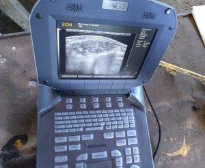 Monitoreo del área de ojo de bife y otros parámetros de calidad por ecografía.