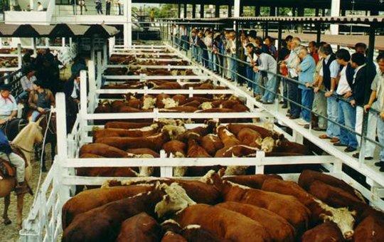 Liniers: novillos y novillitos estables con vacas y vaquillonas con leves bajas