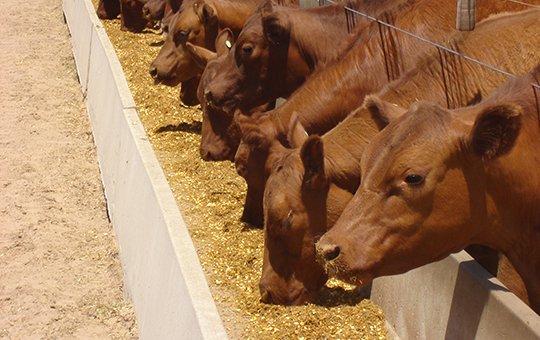 Principales exportadores reducen la cantidad de animales encerrados