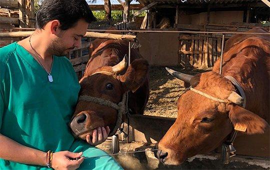 Coronavirus y la necesidad de fortalecer la salud animal