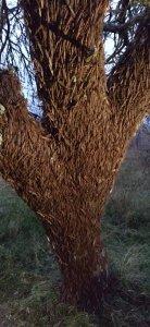 Varias capas de langostas superpuestas sobre un árbol.