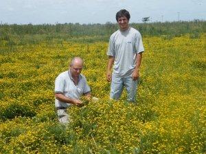 Matías Bailleres (der.) junto a otro técnico de la Chacra, en un potrero con Lotus.