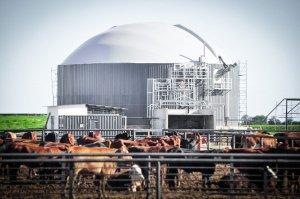 Biodigestor que genera gas para la planta de rolado al vapor.