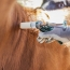 La campaña de vacunación contra la aftosa comenzará el 9 de marzo